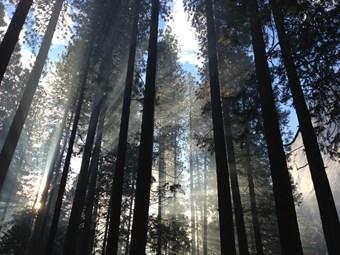 Trees in woodland.jpg