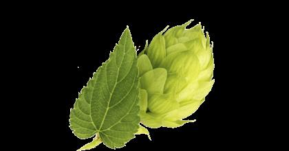Seedlip Ingredient Hops