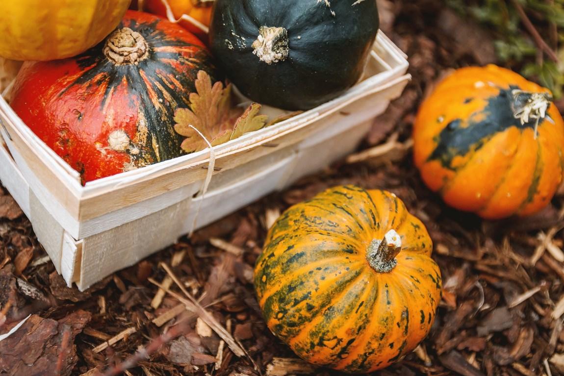 Autumn Pumpkins.jpg