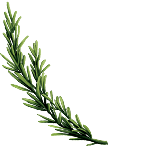 Seedlip Ingredient Rosemamry