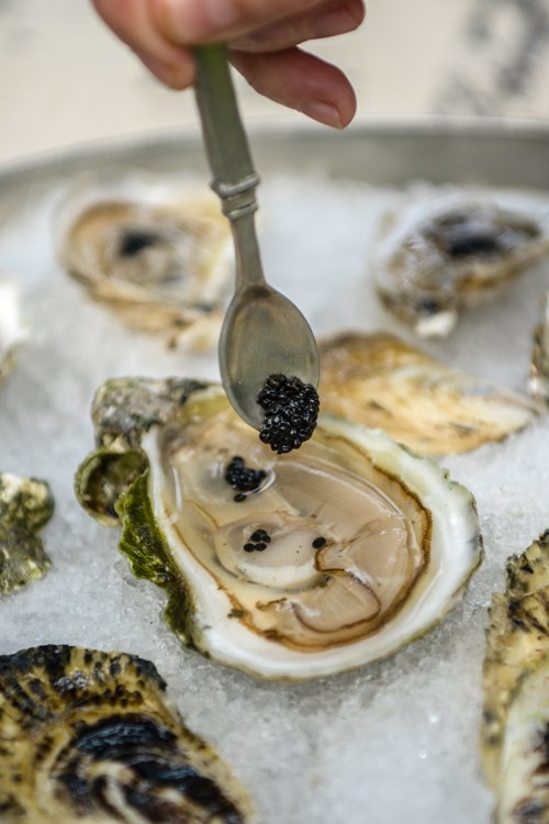 Oyster Picture