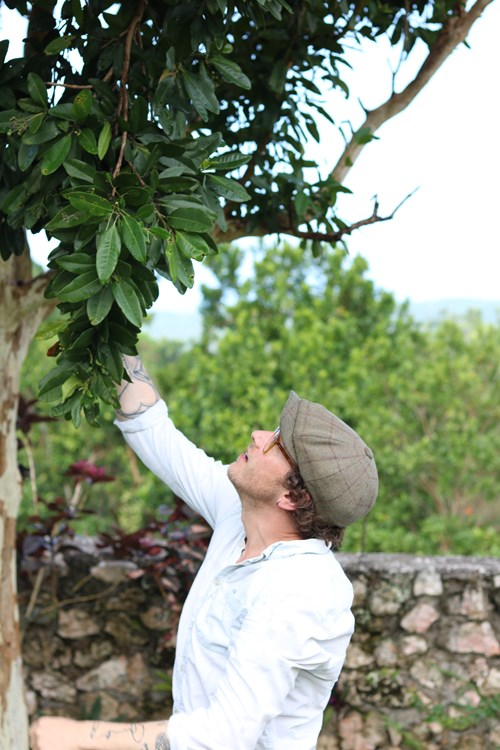 Sourcing All Spice in Jamaica