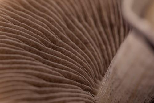 Mycelium Resize Banner.jpg