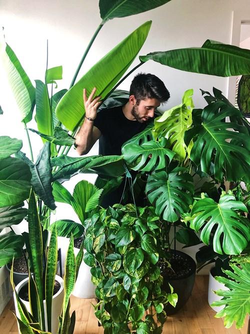 Nick & Plants