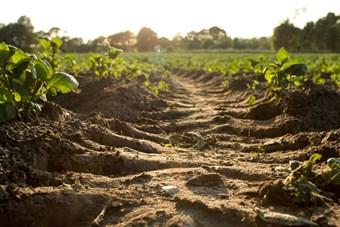 Soil image .jpg