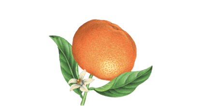 Seedlip Ingredient Oranfe