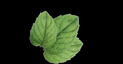 Seedlip Ingredient Spearmint