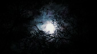 Halloween Full Moon.jpg