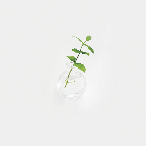 Growing Mint.png