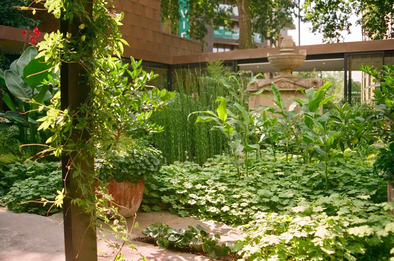 The Garden Museum Garden by Matt Collins.jpg